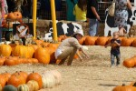 Selma Blair & Son Arthur Pumpkin Patch Fun 2