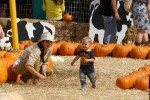 Selma Blair & Son Arthur Pumpkin Patch Fun 3