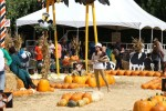 Selma Blair & Son Arthur Pumpkin Patch Fun 6