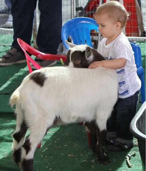 Arthur pets the goats